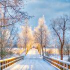 Light of Winter by Veikko  Suikkanen