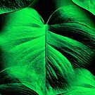 Monstera Leaves by SexyEyes69