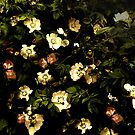 Floral Night I by creativevibe