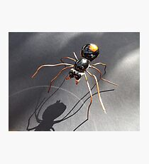 Red Back Spider Photographic Print