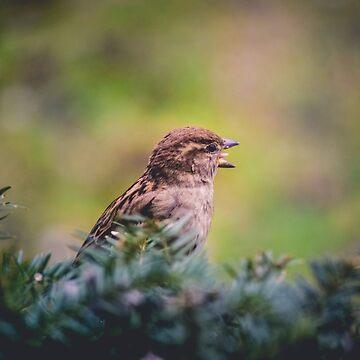Tiny Scream of the BIRB by LittleRedLens
