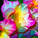 Fleurs-Flowers by Don Wright