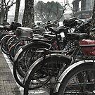 Shanghai Cycle by RoamingRoan