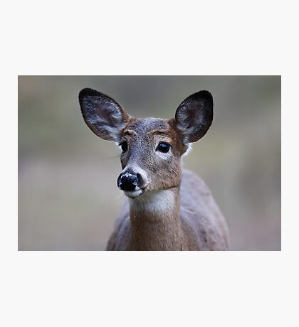 So forlorn - White-tailed Deer Photographic Print