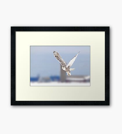 Along a country road - Snowy Owl Framed Print