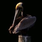 Pelican at Sunset by Jim Cumming