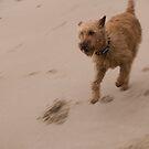 Run. by Jonathan Dower