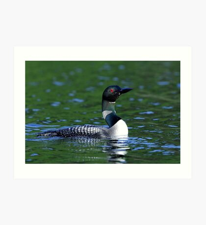 Long neck Loon - Common Loon Art Print