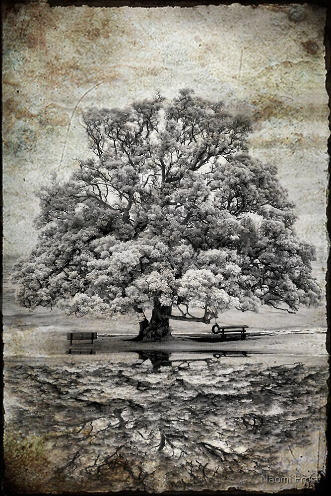 The Beauty Of Grey by Naomi Frost