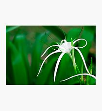 Tropical flower Photographic Print
