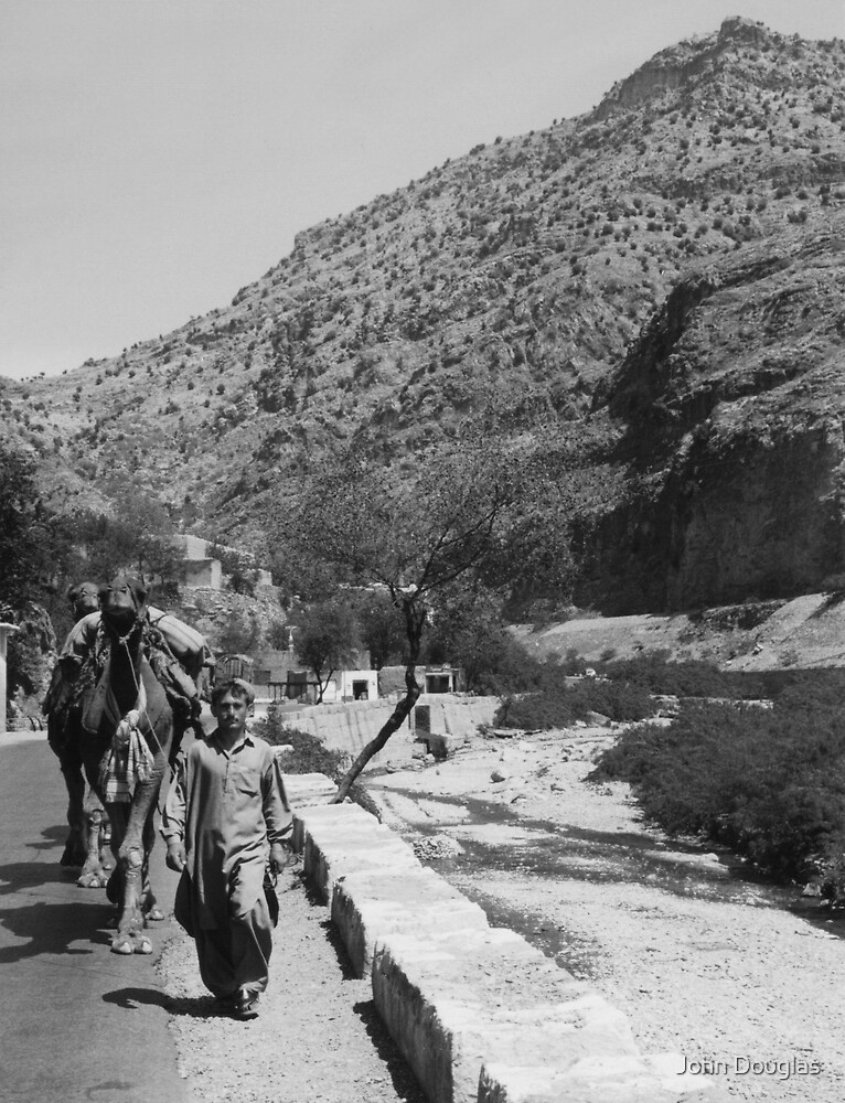 Walking the Camels by John Douglas