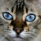 pretty blue 2 by Susanne Correa