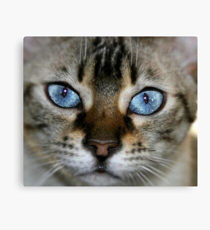 pretty blue 2 Canvas Print