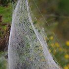 Spider Web Sail by lezvee
