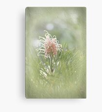 Grevillea in Pastel Canvas Print
