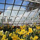 Spring is springing! by Linda Jackson