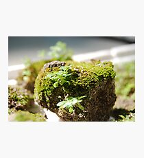 Sand ball with moss toppings.. Photographic Print