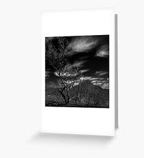 Trees in Flinders-24 Greeting Card