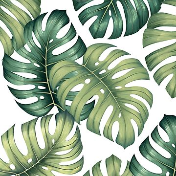 Blatt-Illustrationsmuster Monstera botanisches auf Weiß von MartaOlgaKlara