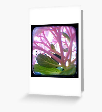 Tentacles Greeting Card