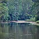 MacDonald River NSW Australia by Bev Woodman