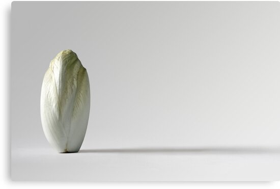 Belgian endive by Barbara  Corvino