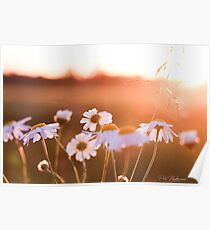 Colorful sunset with flowers Poster