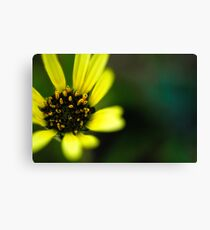 tiny green bug Canvas Print