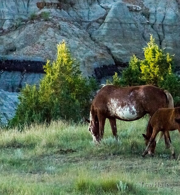 Wild Horse Theodore Roosevelt National Park by Tina Hailey