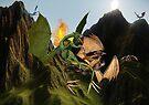 Battle for Dragon Mountain by W E NIXON  PHOTOGRAPHY