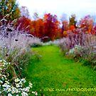 wildflowers in autumn  by PJS15204