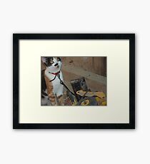 playing in the sandpit Framed Print