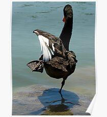 Dancing Swan Poster