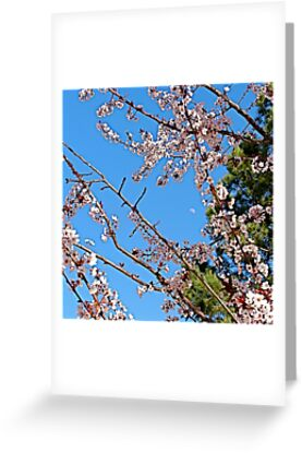 Plum Blossoms, Pine and Moon by deepbluwater