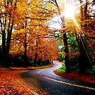 Autumn Rays by James Cole