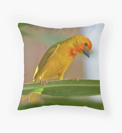 Golden Palm Weaver 6 Throw Pillow