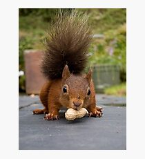 Red Squirrel 2 Photographic Print
