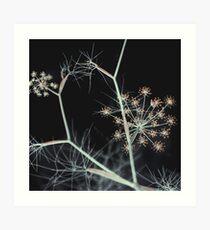 Night Whispers. Dark Floral Art Print