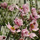 Japanese Wind Flowers by Gabrielle  Lees
