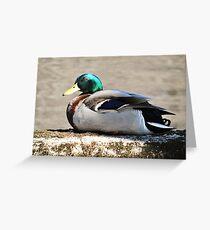 Mallard Drake on the Concord River Greeting Card
