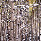 Early Winter Aspens by Luann wilslef