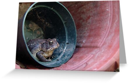 Toad in a Pot by May Lattanzio
