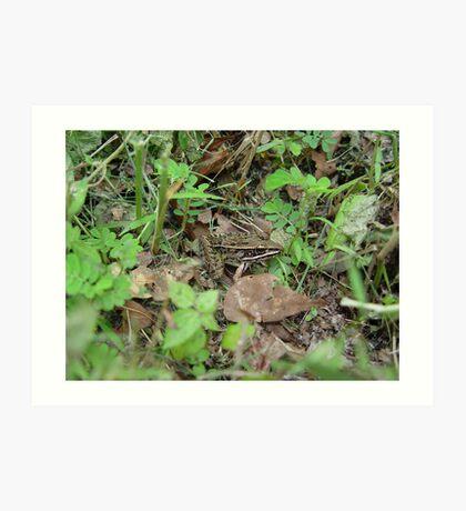 Southern Leopard Frog Art Print
