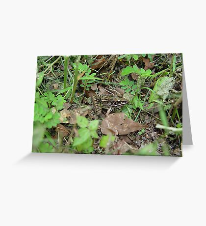 Southern Leopard Frog Greeting Card