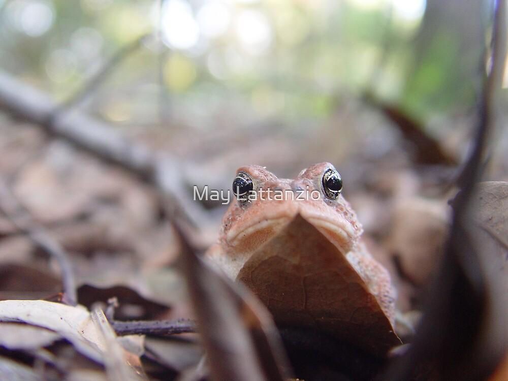 Big Eyes    by May Lattanzio