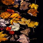 Floating as the Autumn Is by Karol Livote