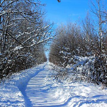 Blue Winter by umpa1