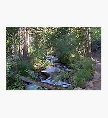 calvin and hobbes forest Photographic Print