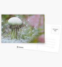 Windblown Dandelion   Postcards