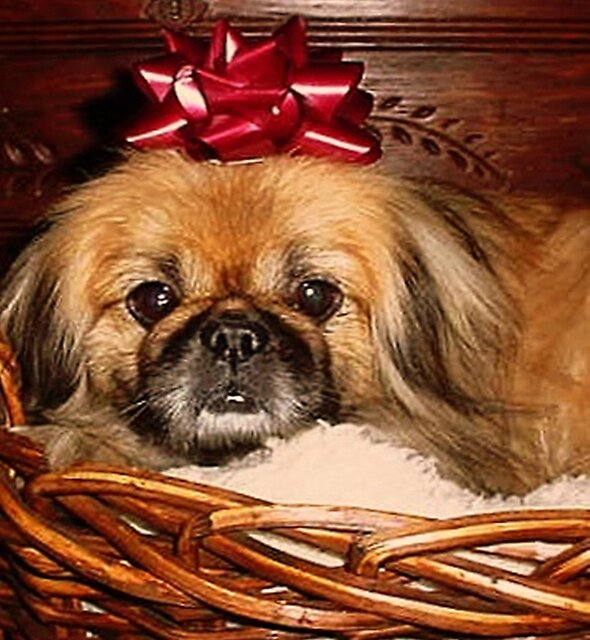 Decorate Your Dog Day! by Susan McKenzie Bergstrom